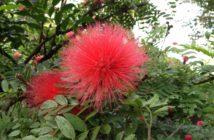 Botanischer Garten Teneriffa