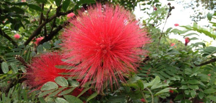 Fotos aus dem Botanischen Garten auf Teneriffa