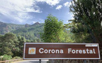 Corona-Forestal Wald Teneriffa