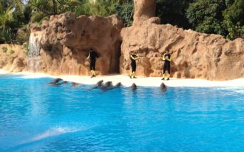 Delfinshow Loro Parque Trainer