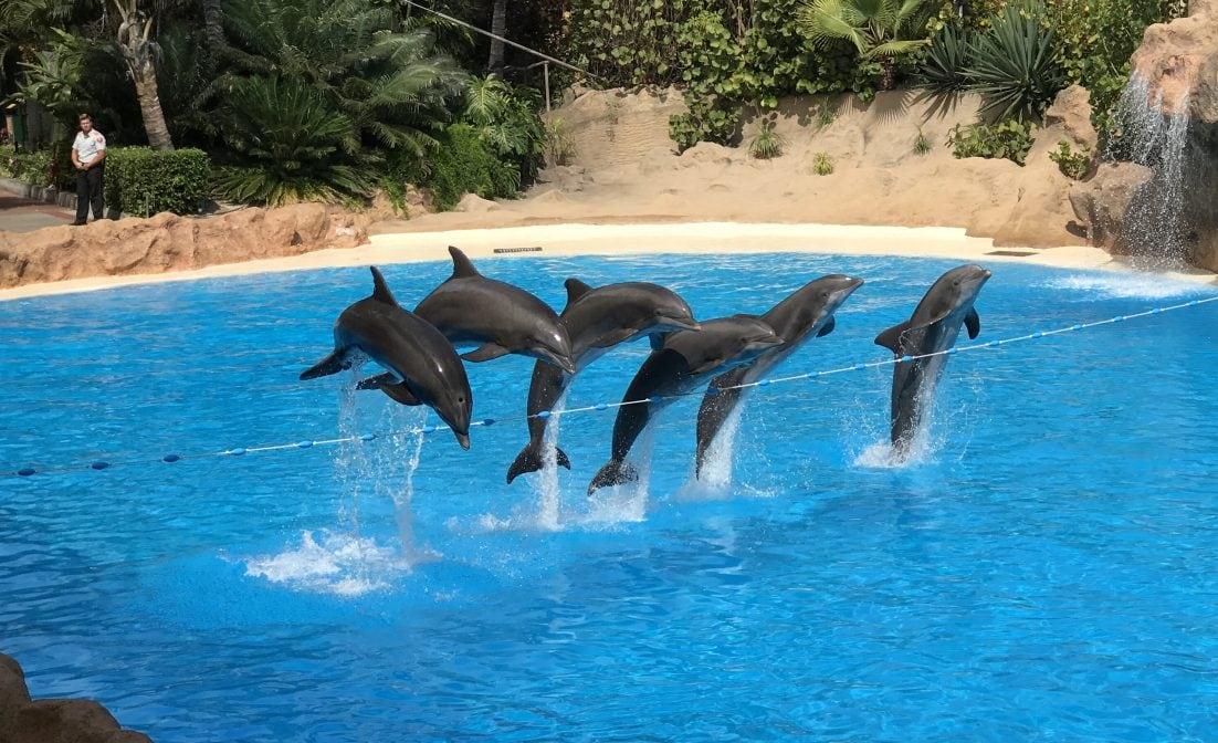 Delfine Loro Parque Sprung