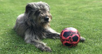 Elli Hund Redaktion Teneriffa News