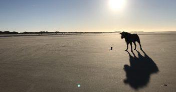 Elli Hund Strand