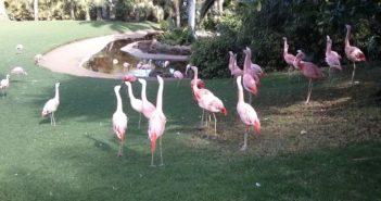 Flamingos Teneriffa