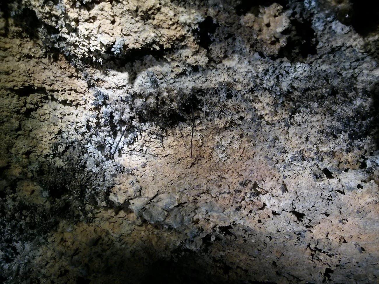 Lavahöhle Cueva del Viento Teneriffa Wurzeln