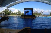 Loro Parque Jubiläum im Orca Ocean