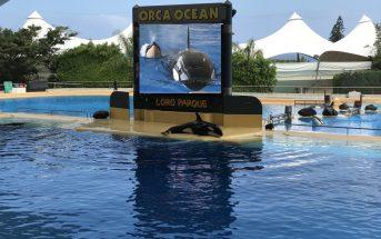 Loro Parque Orca Morgan Baby Montage