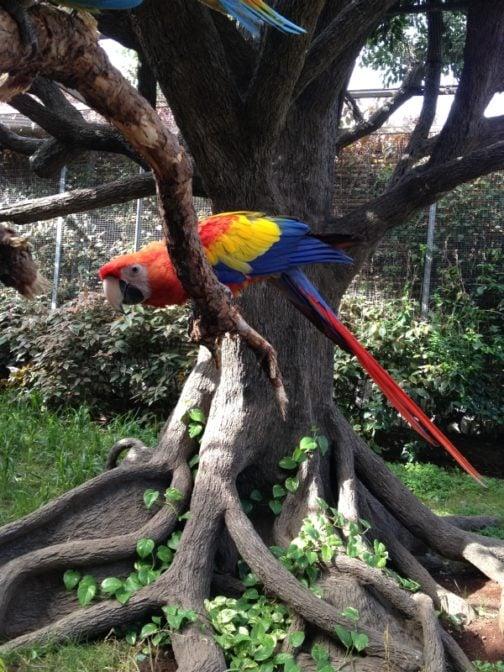 Papagei im Loro Park