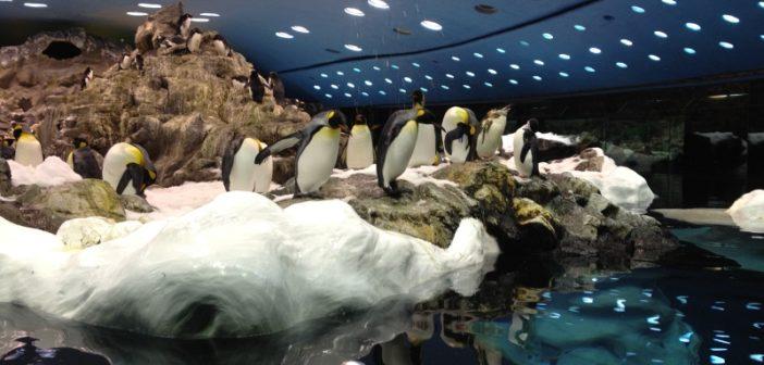 Planet Penguin im Loro Parque