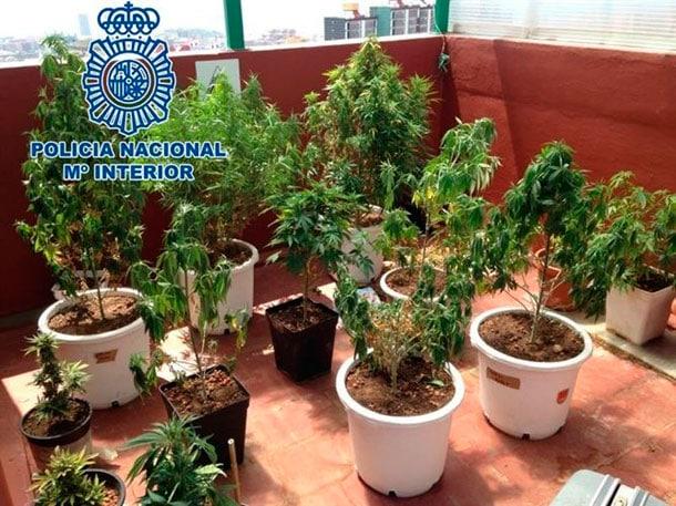 Marihuana Cannabis Teneriffa Santa Cruz