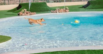 Mascot Ressort Teneriffa Hunde-Hotel Agility Pool