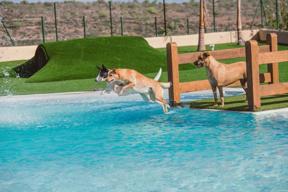 Mascot Ressort Teneriffa Hunde-Hotel Pool Sprungbrett