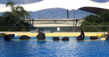 Vicky Orca Ocean Loro Parque