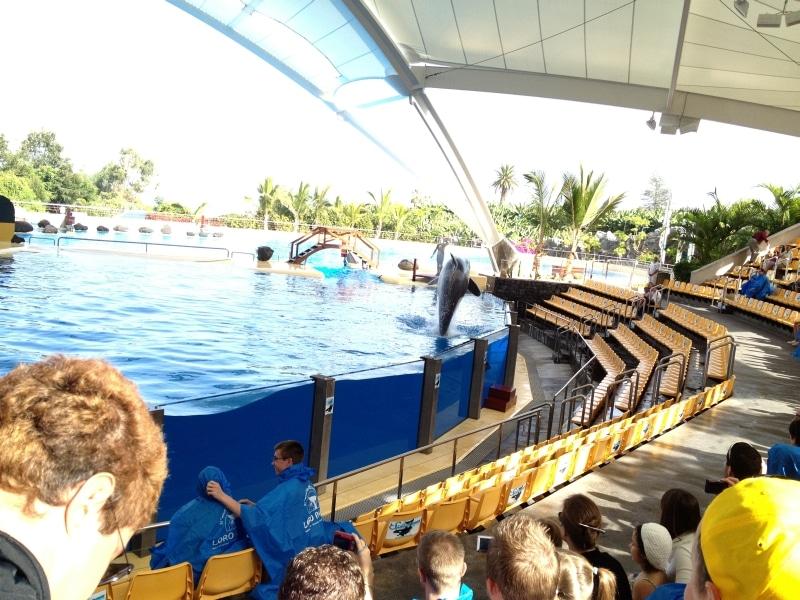 Zuschauerraum Orca Ocean Loro Parque Teneriffa