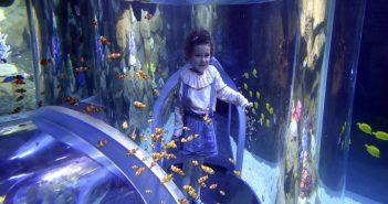 Poema del Mar Gran Canaria Clownfische
