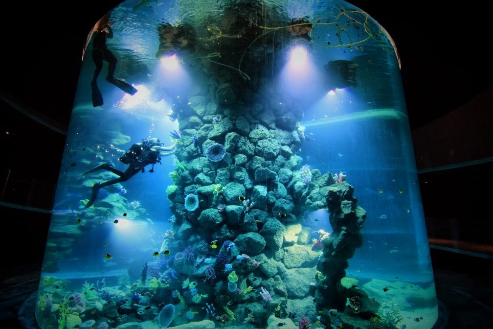 Poema del Mar Gran Canaria Aquarium Glaszylinder