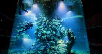 Aktuelle nachrichten teneriffa news for Aquarium poema del mar