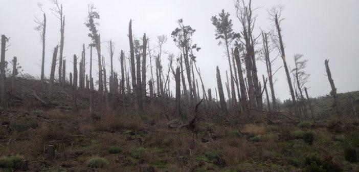 Sturmschäden auf Teneriffa