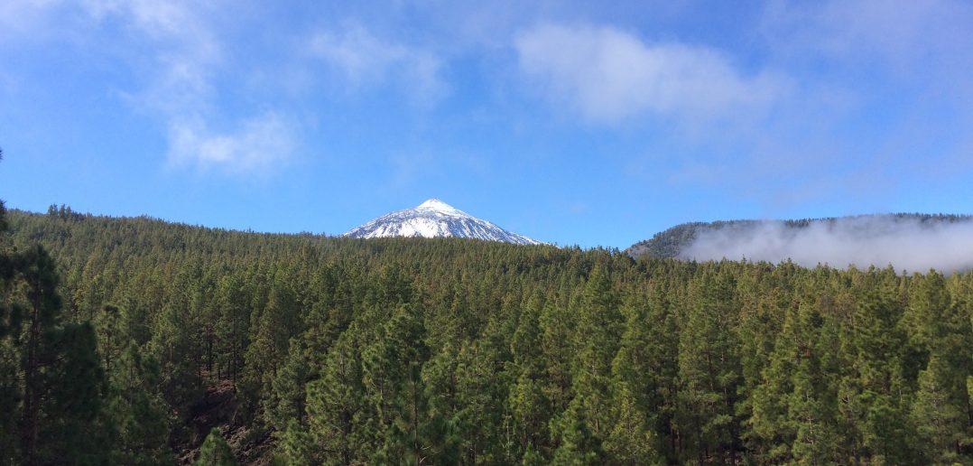 Teneriffa Teide Bäume Gipfel