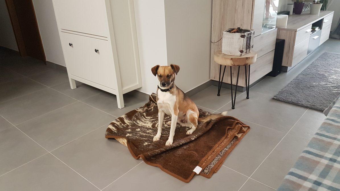 Teneriffa-Tier Sanchez ist vermittelt Decke