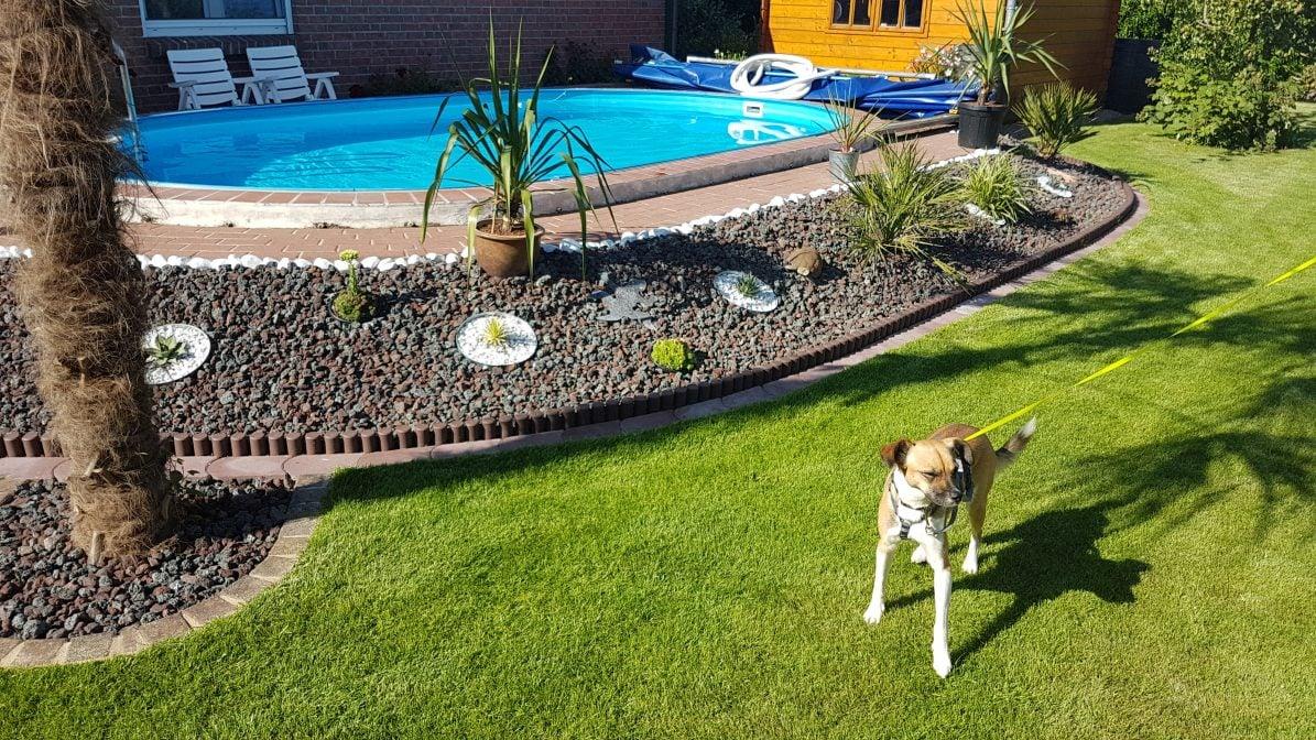 Teneriffa-Tier Sanchez ist vermittelt Garten