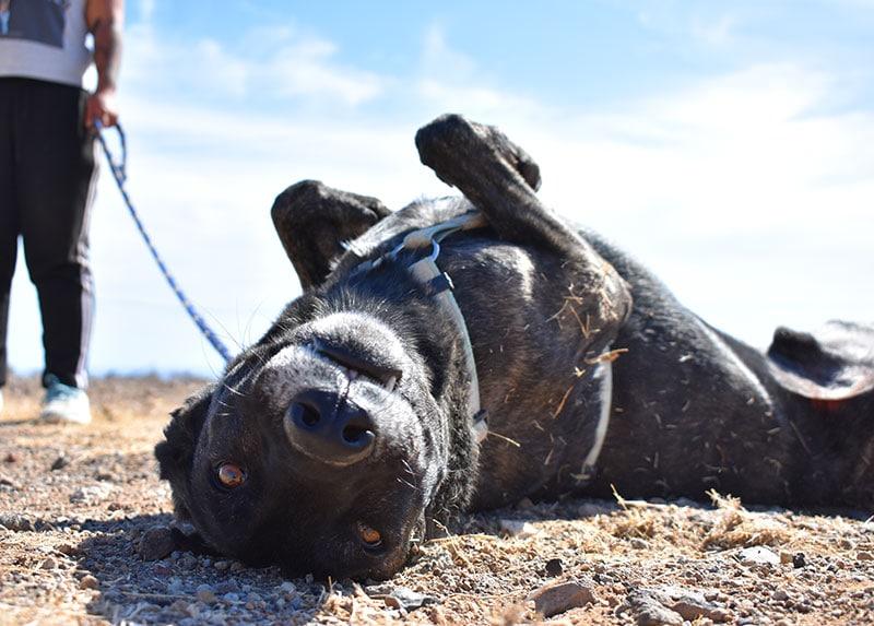 Fotos: Das ist unser 'Teneriffa-Tier' Camino