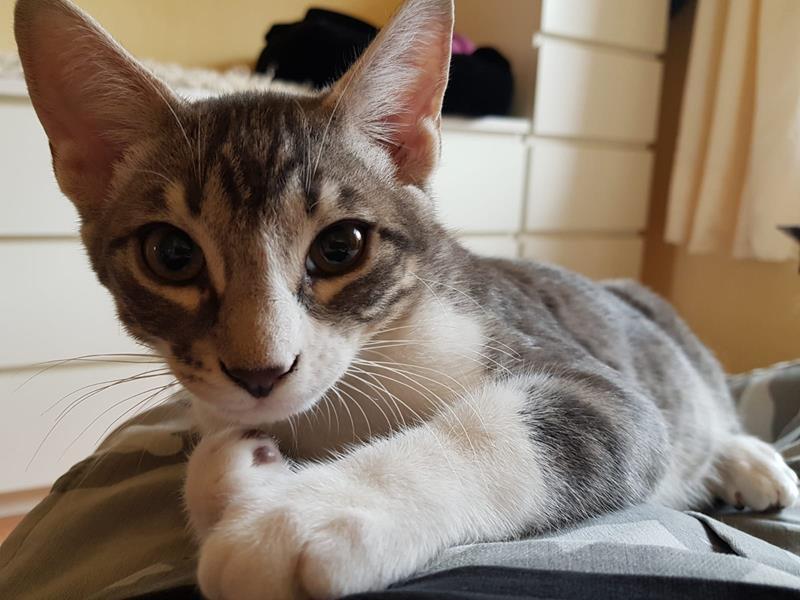 Teneriffa-Tiere Krümel Katzen 3