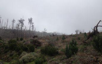Umgestürzte Bäume nach dem Unwetter auf Teneriffa
