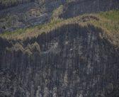 La Palma: Waldbrand-Verursacher soll Hund gebissen haben