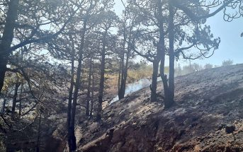 Waldbrände La Palma Kanaren verbrannte Bäume