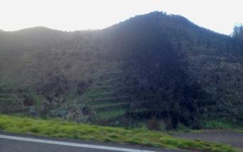 Waldbrände auf Teneriffa: Schäden