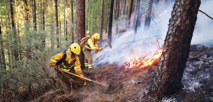 Fotos und Videos: Waldbrände wüten auf Gran Canaria