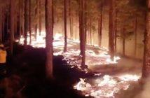 Waldbrand Gran Canaria Forstbrigade Cabildo 08-2019