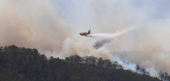 Fotos und Videos der Waldbrände bei Arico auf Teneriffa