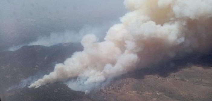 Waldbrand Teneriffa Arico 05-2021