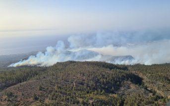 Waldbrand Teneriffa Arico 2021 Kanaren Waldbrände Feuer