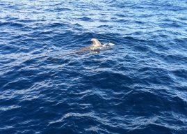 Fotos vom Whale Watching auf Teneriffa